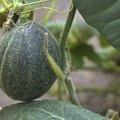 List of Fruit Bearing Plants