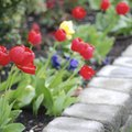 How to Make Raised Flower Beds