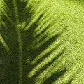 Can Grass Grow in Artificial Light?