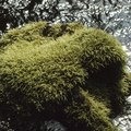 Lime to Kill Moss