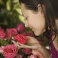 Rose Plant Habitats