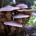 How to Kill Mushroom Spores