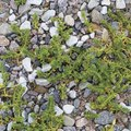 How to Use Bleach to Kill Weeds in Gravel Driveways
