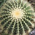 Adaptations for Barrel Cactus