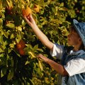 How to Identify Orange Trees