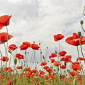 Types of Italian Flowers