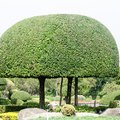 Which Plants Make the Best Topiaries?