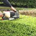 The Best Time to Trim or Cut Hedges