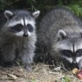 How to Protect Fruit Trees from Squirrels, Raccoons and Birds