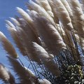 Plants That Look Like Cattails