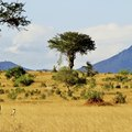 Types of Trees, Grass & Shrubs in the Savanna