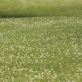 The Time for Clover Seed Germination