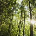 What Products Are Made From Trees?