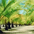 How to Care for a Robellini Palm