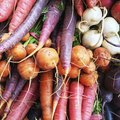 What Vegetables to Plant in the Spring, Summer and Fall