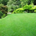 When To Cut New Grass