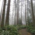 Which Wood Is Harder, Douglas Fir or Oak?