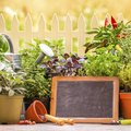 Herb Plants That Can Be Potted Together