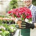 The Best Scented Indoor Plants