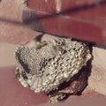 Does Borax Kill Bees?
