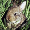 Do Cottontails Eat Birdseed?