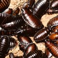 How to Keep Water Bugs and Roaches out of the House