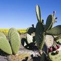 What Eats a Cactus?