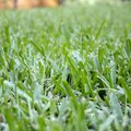 How to Make Your Own Grass Dye