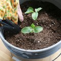 How to Grow Cucumbers In a Container