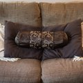 How to Get Rid of Odor Coming From a New Sofa