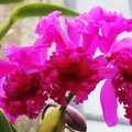 How to Make Your Own Agar for Orchids