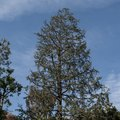 How to Fertilize Spruce Trees