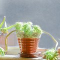 How to Revive Wilted Potted Plants