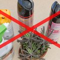 Homemade Bug Spray for House Plants
