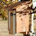How to Sparrow-Proof a Bluebird House
