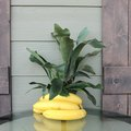 How To Feed Bananas to Staghorn Ferns