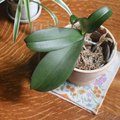 What to Do to Stop Plants From Leaking Water on the Floor