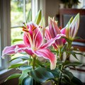 How to Get Lilies to Open