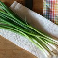 How to Freeze Green Onions