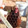 How to Design a Poultry House