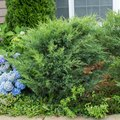 How to Remove Bushes