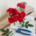 How to Take Care of Roses in Vases