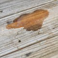 How to Remove Urine Odor From Wood