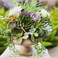 11 Artfully Arranged Succulents Seen on Instagram