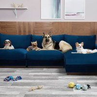 These Are the Best Pet-Friendly Couches