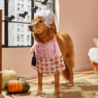 These 17 Pet Costumes Will Win Halloween