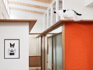 cat room bedroom