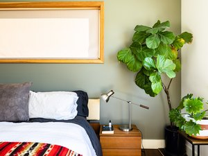 A large plant in a bedroom with green-white walls and wood framed windows