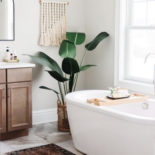 A bathtub with a beautiful banana leaf plant in the corner