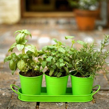 Close-up of three potted plants on a tray